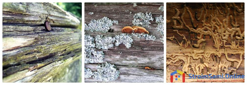 Фото 2. Деревянные дома, не обработанные специальными средствами, подвержены воздействию процессов коррозии, а также образованию грибка и личинок жуков.