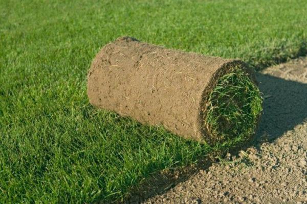 На фото: рулонный газон