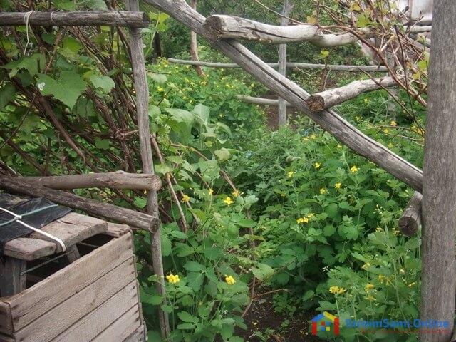 На фото: огород