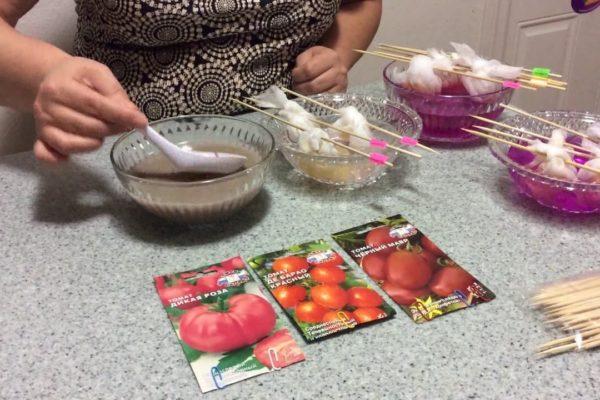 На фото: подготовка семян томатов к посеву