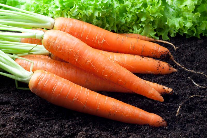 На фото: урожай моркови