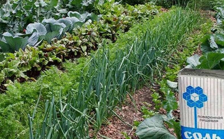 Использование соли в огороде
