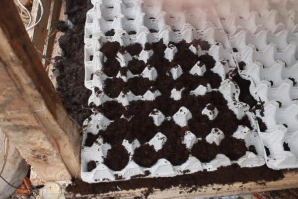 На фото: посев семян моркови в лотки из под яиц