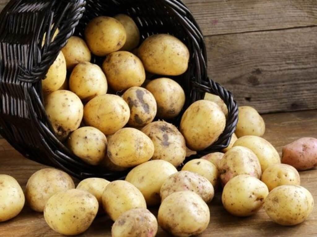 На фото: урожай картофеля