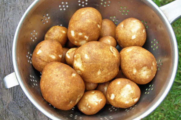 "На фото: сорт картофеля ""Киви"""
