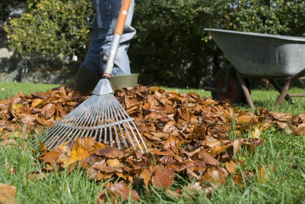 На фото: уборка опавших листьев на приусадебном участке