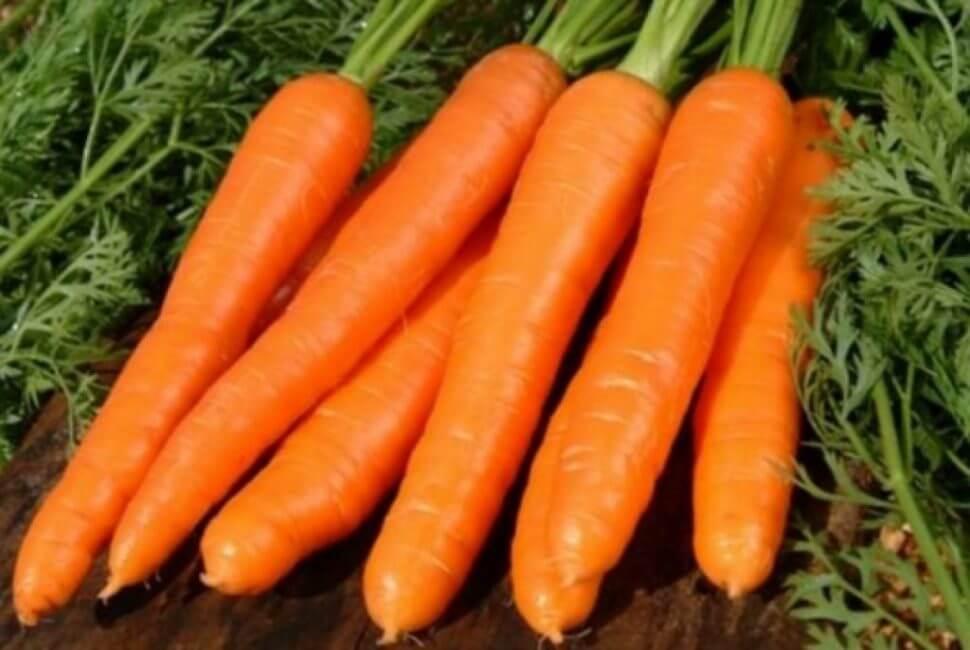 На фото: сорт моркови Микуловская