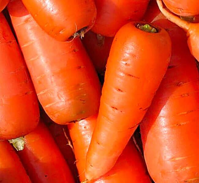 На фото: сорт моркови Шансон