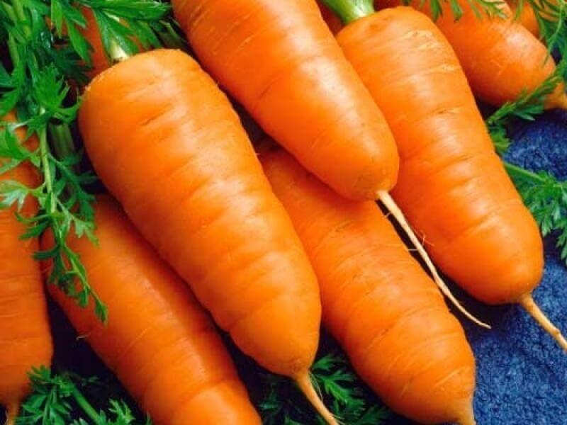 На фото: сорт моркови Шантане