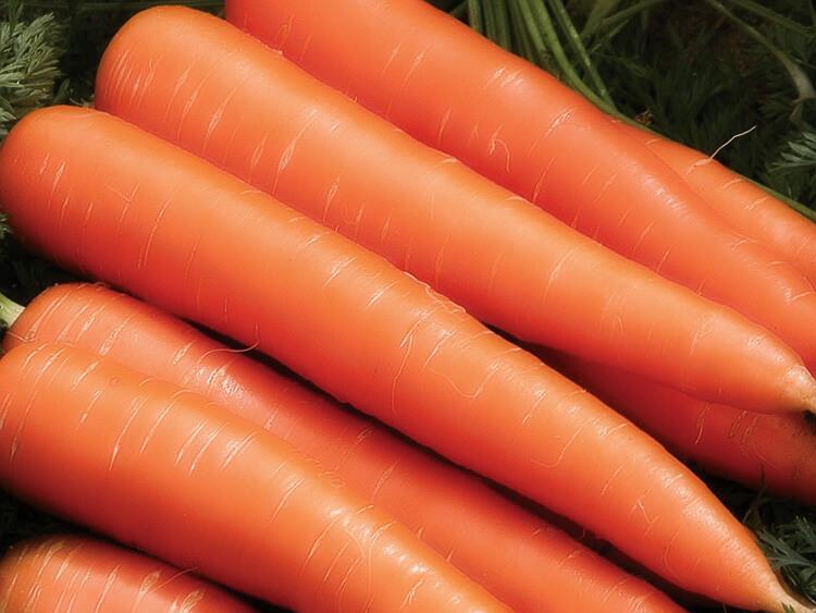 На фото: сорт моркови Зимний цукат