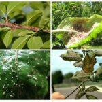 Как бороться с тлёй на плодовых деревьях и кустарниках