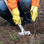 Как правильно посадить плодовое дерево весной