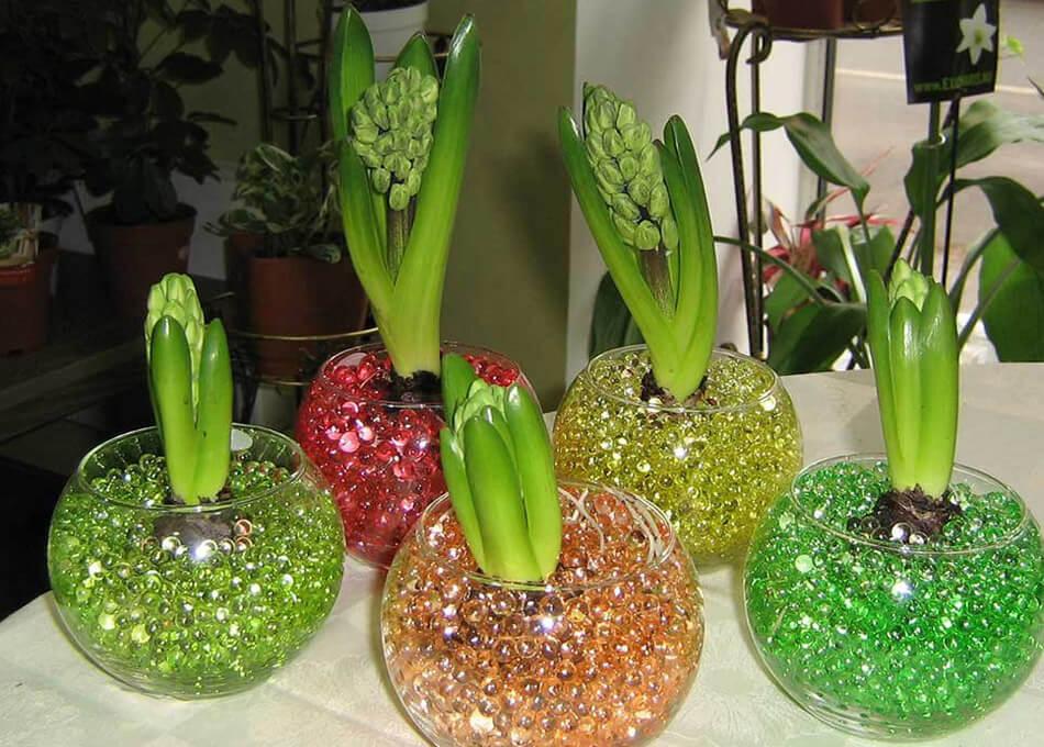 Аквагрунт для цветов (гидрогель)
