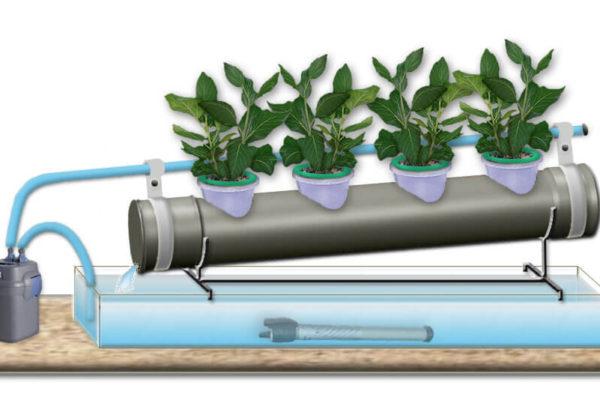 Гидропонная ферма, гидропоника, растения на гидропонике, выращивание растений без почвы,