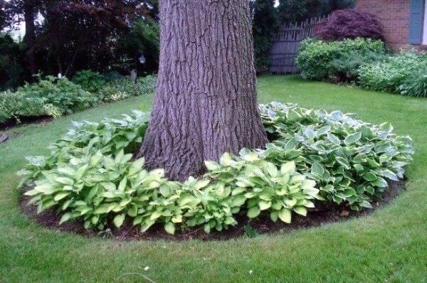 Цветы вокруг дерева в саду