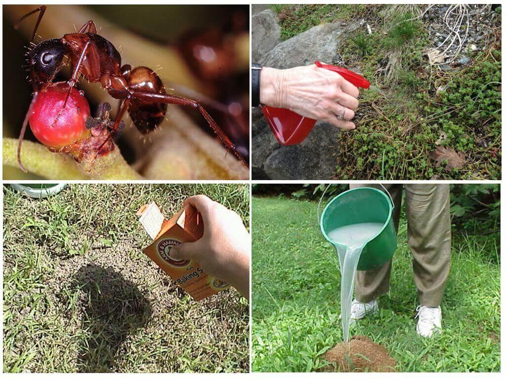 Средства борьбы с муравьями в саду
