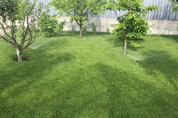 На фото: посевной газон