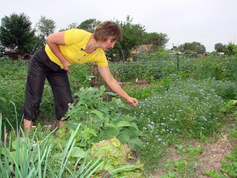 Что делать в саду в июле