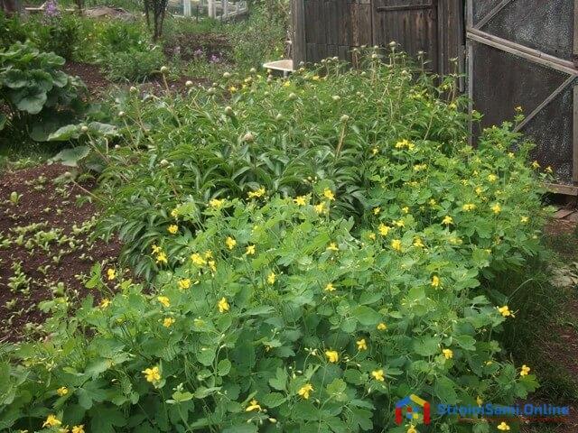 На фото: цветы в саду