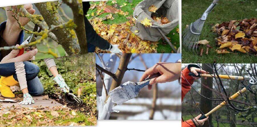 Календарь работ по уходу за деревьями и кустарниками в саду