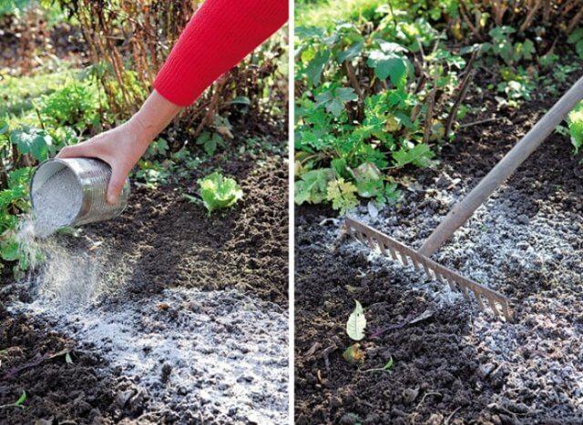 Зола как удобрение: как правильно использовать на огороде