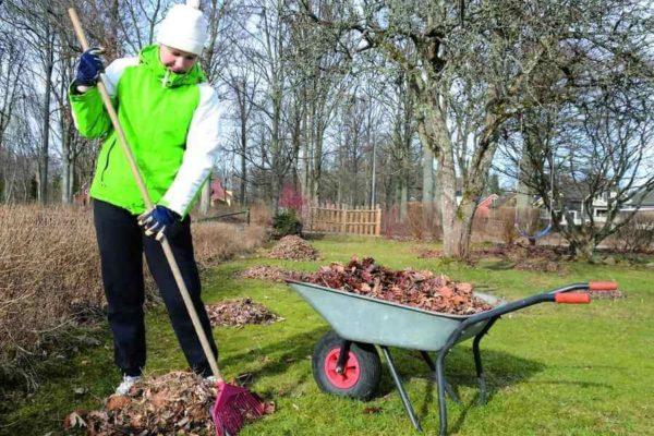 На фото: уборка листвы в саду