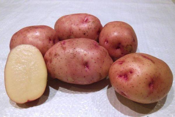 """На фото: сорт картофеля """"Жуковский"""""""