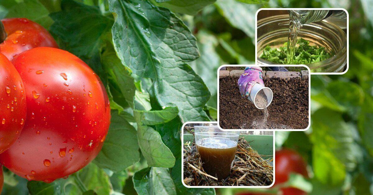 На фото: способы применения помидорной ботвы в огороде