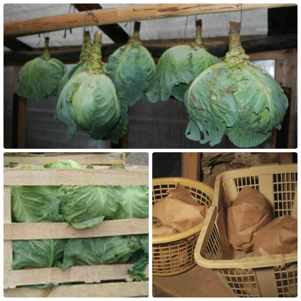 Как сохранить капусту на зиму